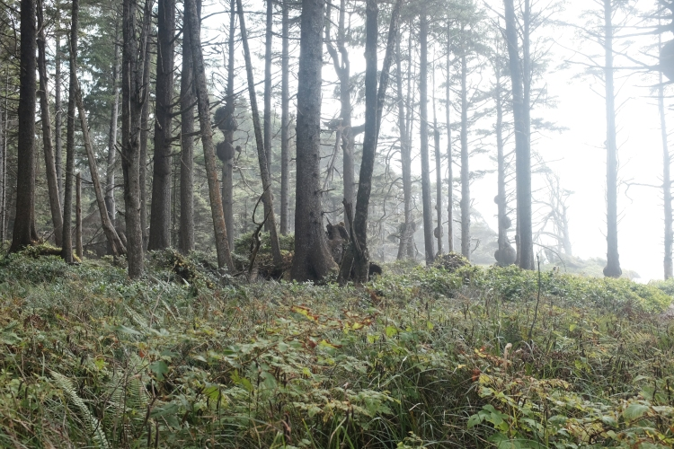 misty photography of a forest on the coast of oregon