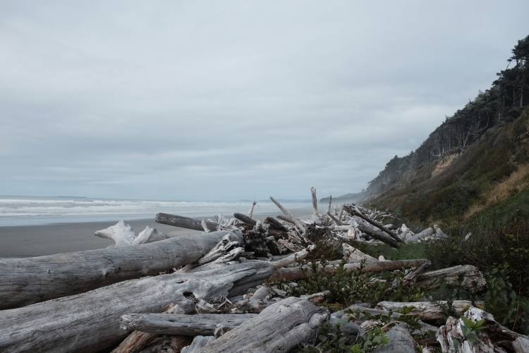travel photography of driftwood trees and cliffs on oregon's coast