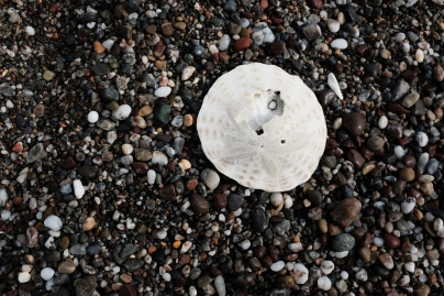 beach with pebbles and sand dollar