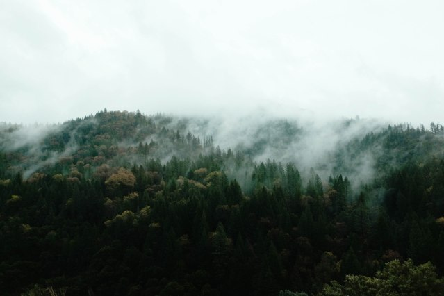 foggy mountain forests in washington with green trees