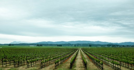 photography of vineyard in sonoma valley, california
