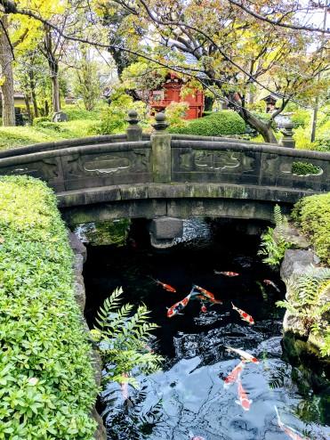 koi fish, pagoda, stone bridge, and foliage in Tokyo