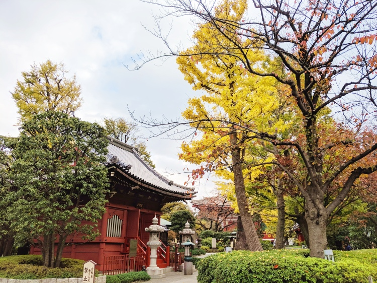 red pagoda and yellow autumn leaves in Asakusa, Tokyo, Japan