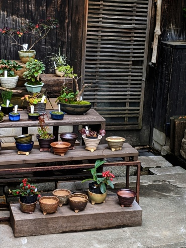 clay pots and bonsai at a traditional plant shop in tokyo japan