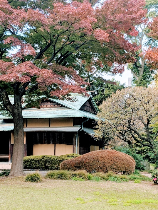 traditional teahouse surrounded by red fall leaves in tokyo's imperial palace gardens