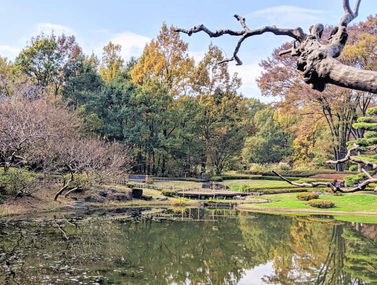 fall trees overlooking a small pond in tokyo's imperial palace gardens