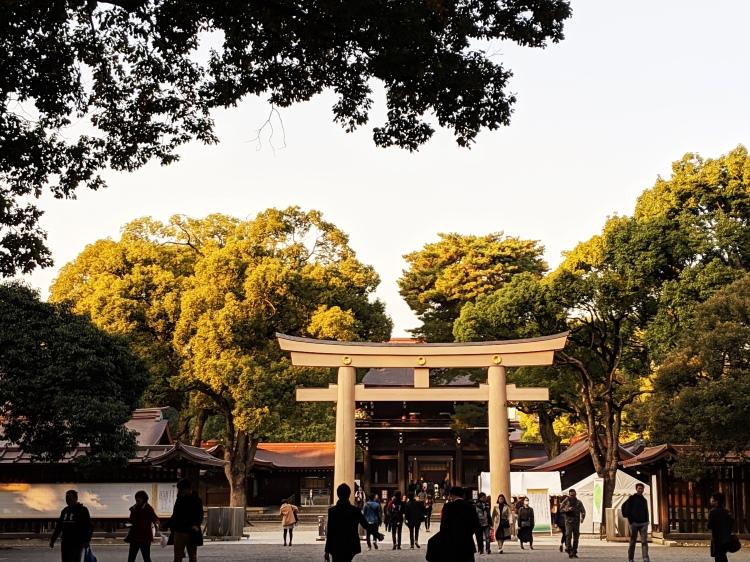 golden autumn sunset in the meiji-jingu shinto shrine in tokyo